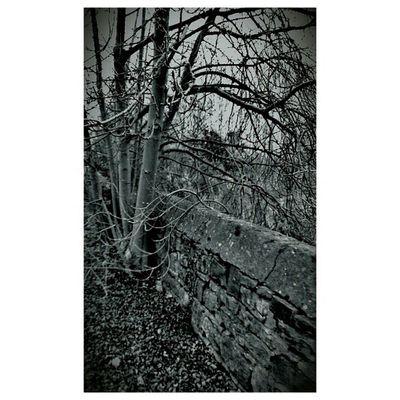 Landscapelovers Instagram Travelingram BWWinter Winter December