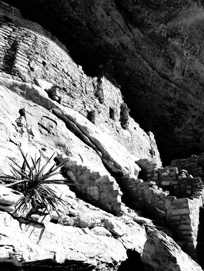 Lone yucca guarding the ancient ruins of Mesa Verde National Park Yuccaplant Desert Blackandwhite Blackandwhite Photography Black And White Photography Colorado Colorado Photography United States American Southwest Southwestern Usa Mesa Verde National Park National Park Native American Indian Cliff Dwellings Tribal Culture Tribal Village Shadow Sunlight Rock - Object High Angle View