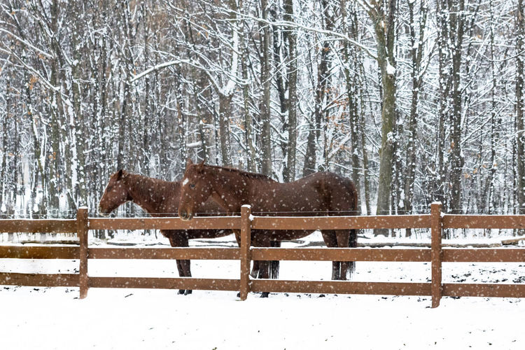Animal Themes Beauty In Nature Cold Temperature Domestic Animals Horses No People Paddock Snow Snowing Tree Weather Winter