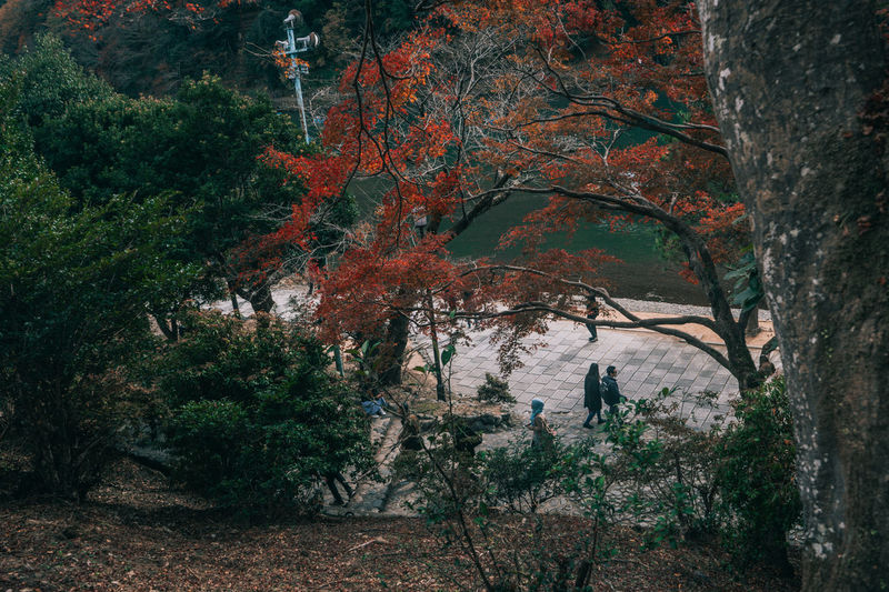 // kyoto in autumn // AMPt_community Japan Nature Shootermag EyeEm Best Shots EyeEm Nature Lover Tree Autumn Plant Land Forest People Outdoors Change Full Length Growth Day Beauty In Nature Tranquility Leisure Activity Two People Tranquil Scene Branch Walking WoodLand