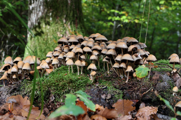 Close-up of mushrooms on field in forest