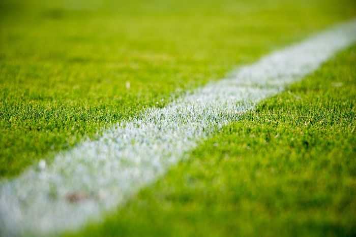 the amazing focus on the grass of a soccer playground #Football #SoccersLife #playground #soccer  Close-up Day Grass Green Color Growth Nature No People Outdoors Selective Focus Soccer Field Tilt-shift Turf
