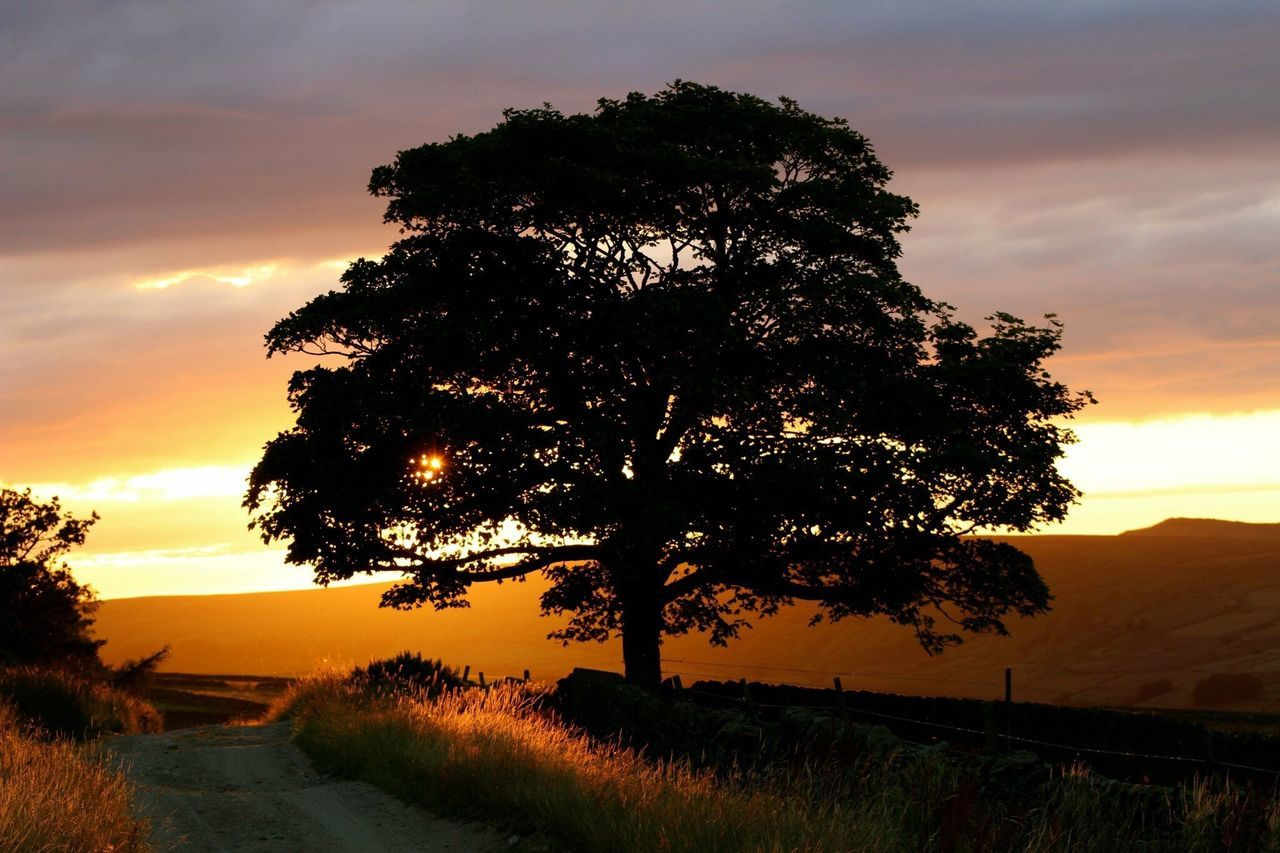 tree, sunset, scenics, tranquil scene, nature, tranquility, beauty in nature, sky, silhouette, growth, landscape, cloud - sky, no people, outdoors, grass, road, day
