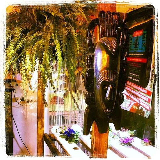 Couldn't pass up the fern for $9.00. Hydroponics Organics Horticulture Hydroculture plants gardening instagarden instagrow hanging fern green tropical