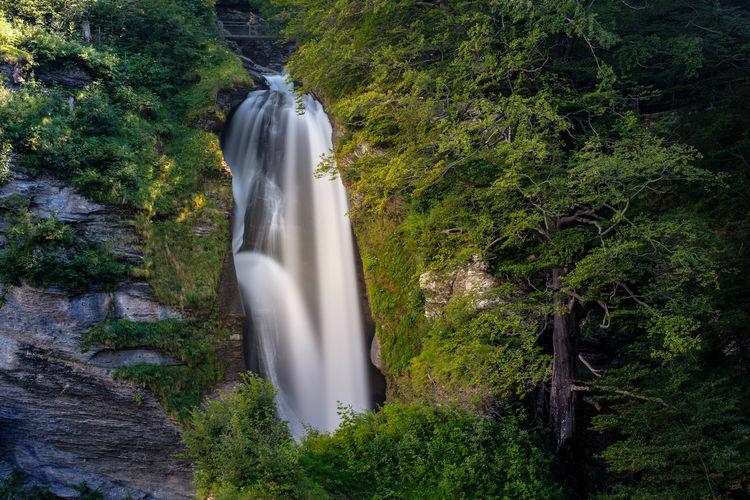 Fall Tree Water