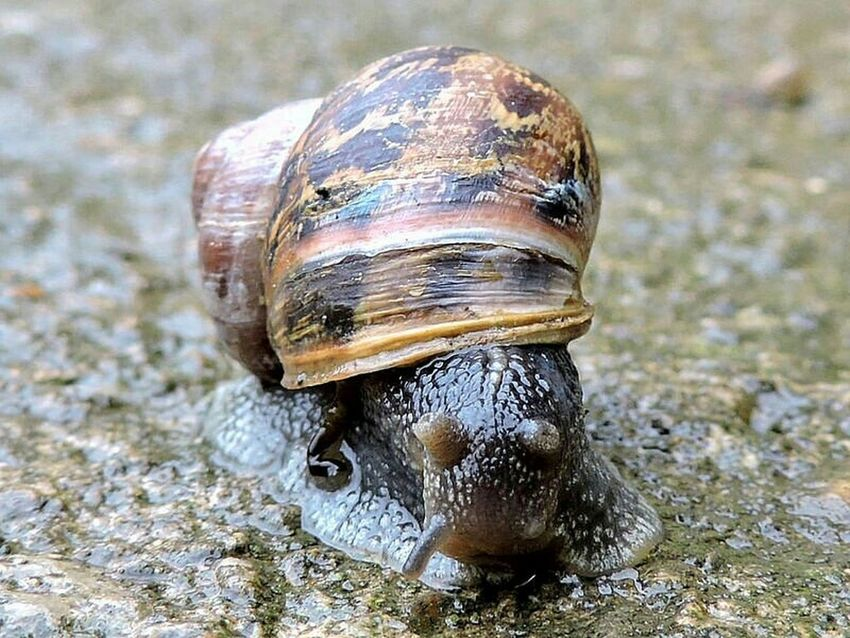 Check This Out Nature Photography Nature On Your Doorstep Beautiful Nature Snail🐌 Snails Snail Shell Snails Pace EyeEm Best Shots - Nature