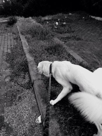 Walking Around My Dog RainyDay Take A Walk With Me