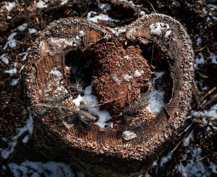 Wald Wald Waldlichtung Waldweg Herz ❤ Winter Nature Wälder Forest Tree Waldspaziergang EyeEm Selects EyeEmNewHere