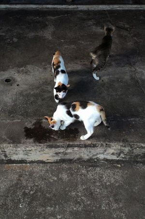Street Cat Cute Pets Love ♥ Lovely Cats Street Three Cats