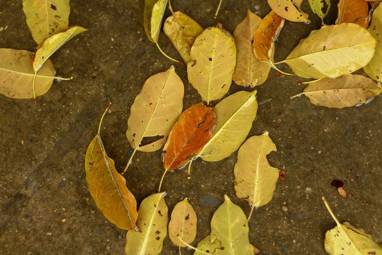 High angle view of autumnal leaves