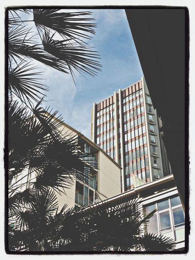 Lookingup Zena4ever Citysights