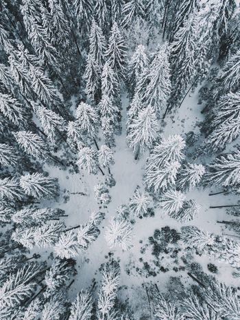 Aerial Shot Drone  Above Abstract Backgrounds Beauty In Nature Christmas Close-up Cold Temperature Day Fir Tree Frozen Full Frame High Angle View Ice Crystal Nature No People Outdoors Pattern Snow Snowflake Spruce Tree Tree Weather Winter