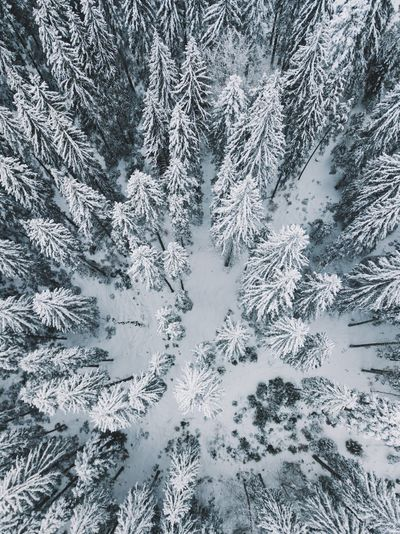 Aerial Shot Drone  Above Abstract Backgrounds Beauty In Nature Christmas Close-up Cold Temperature Day Fir Tree Frozen Full Frame High Angle View Ice Crystal Nature No People Outdoors Pattern Snow Snowflake Spruce Tree Tree Weather Winter Go Higher