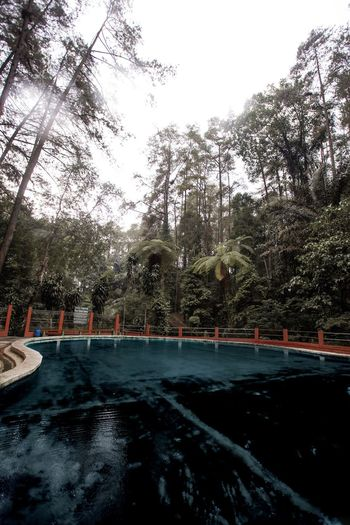 The Blue Water Swimming Pool INDONESIA Moody Green Tropical Moody Moody Nature Tropical Tree Plant Nature Cold Temperature Sky Outdoors
