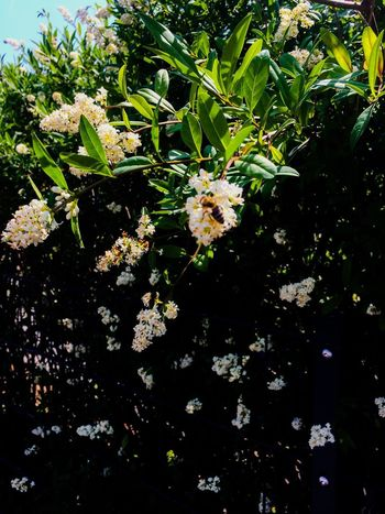 Flower Plant Flowering Plant Growth Beauty In Nature Freshness Nature Plant Part Fragility Leaf Vulnerability  No People Day White Color Close-up Outdoors Blossom Botany Petal Sunlight