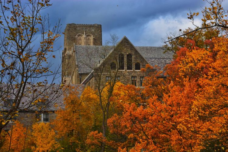 Nature_collection Nature EyeEm Nature Lover EyeEm Best Shots - Nature #Cornell #university #ithaca #fall #autumn #foliage #Storm Autumn Leaf Change History Architecture Building Exterior Built Structure