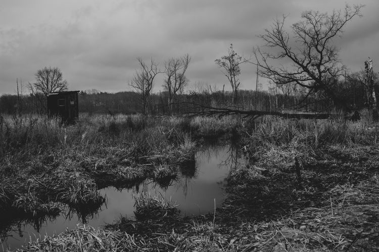 wetland and