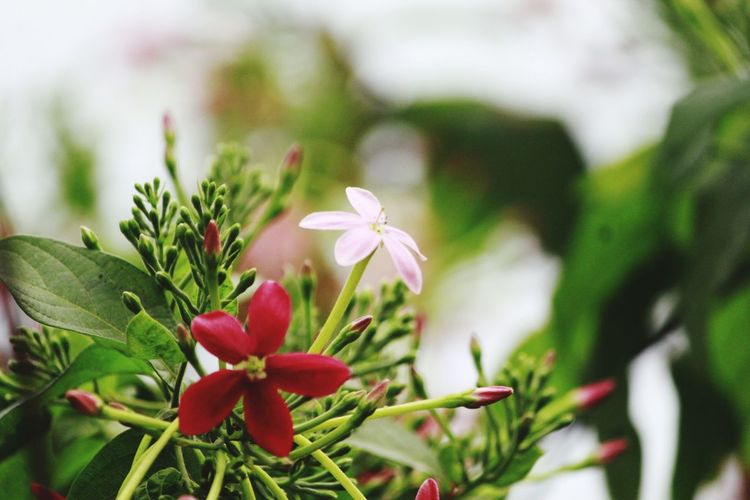Flower Plant Growth Nature Green Color Pink Color Beauty In Nature Leaf Flower Head Petal Fragility No People Day Outdoors Close-up Red Springtime Freshness Botanical Garden