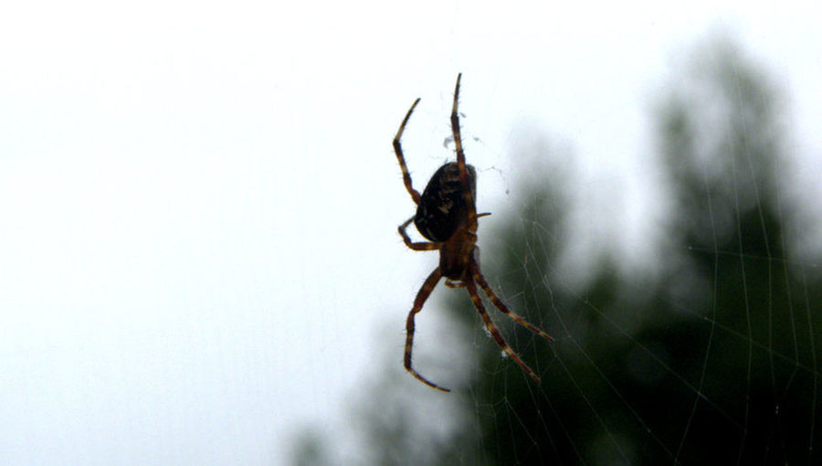 """""""Spider"""" Relaxing"""