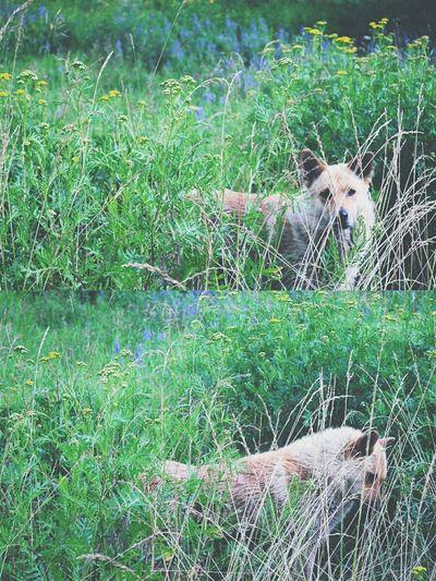 Dog standing on grassy field