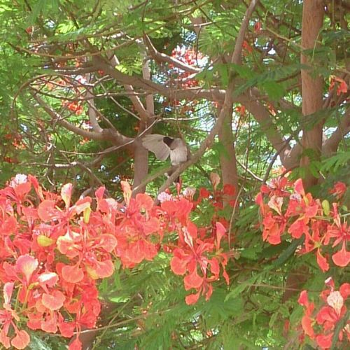 Hz339 Streamzoofamily Bird Colorful