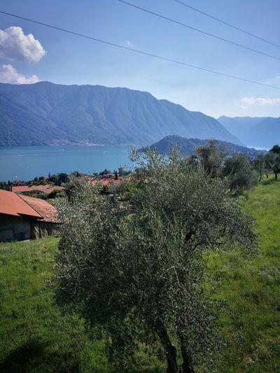 Nature Como Lake ulivi