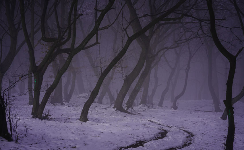 Bare trees on snow covered land during winter