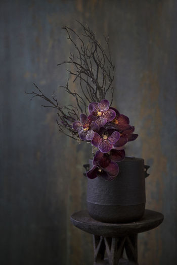 Close-up of potted plant in vase against wall