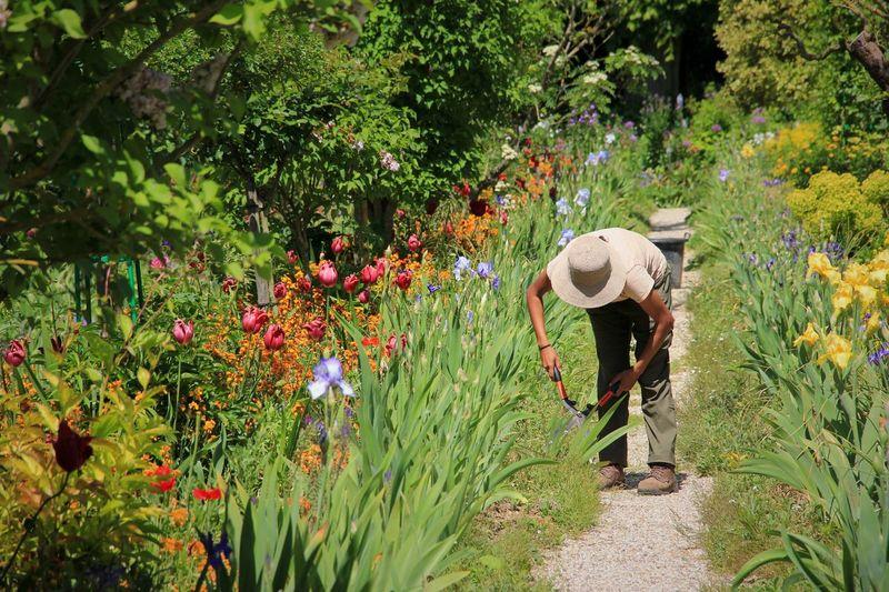 Gardener in