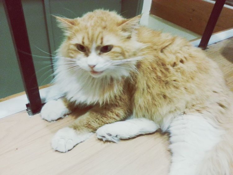 Angry Cat Catcatcat Bite