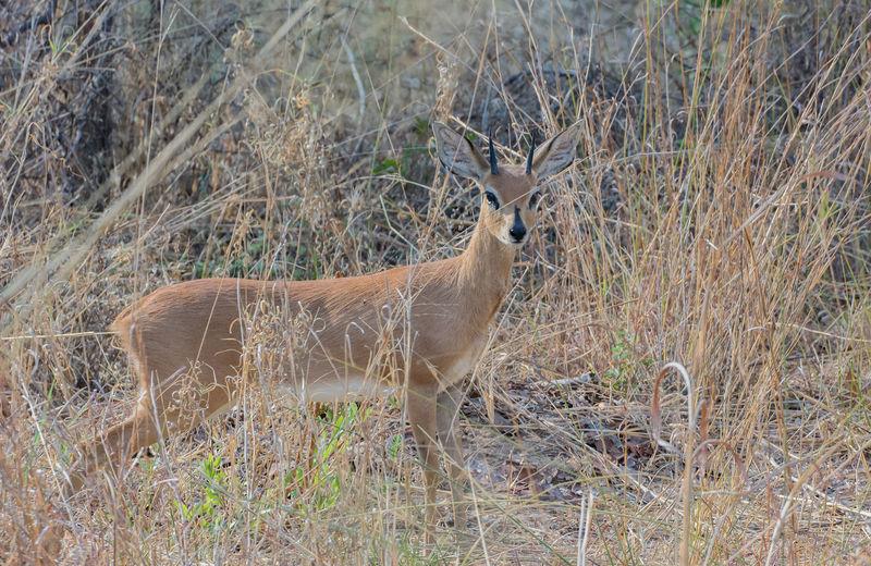 Deer Walking Amidst Plants In Forest
