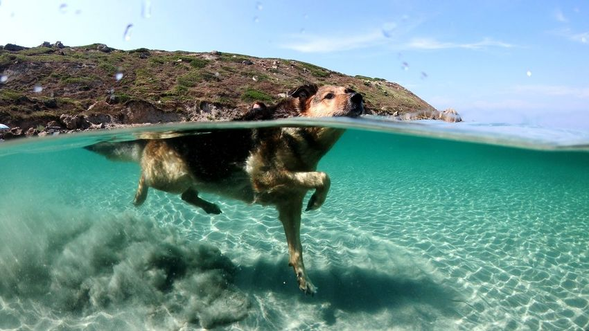 SPLASH 💦 Gopro GoProhero6 Dome Goprodome Dog Love Sardinia Sardegna UnderSea Scuba Diving Sea Life Swimming Water Sea Underwater Adventure Beach Sand Animal Fin
