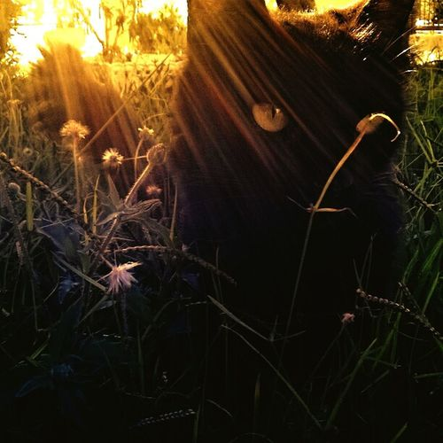 Nature Grass Outdoors Sunset Beauty In Nature Close-up Day No People Colours Plant Sunlight Sun Green Cat Wild Black Crepuscolo Beauty In Nature Leafs