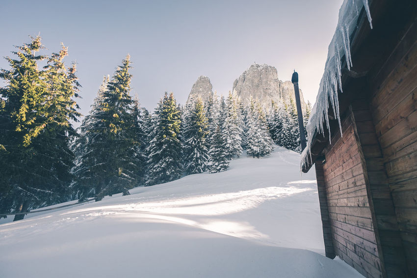 Beauty In Nature Cold Temperature Coniferous Tree Covering Day Frozen Mountain Nature No People Non-urban Scene Outdoors Pine Tree Plant Scenics - Nature Sky Snow Snowcapped Mountain Sunlight Tranquil Scene Tranquility Tree White Color Winter