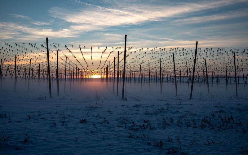 Dusk Holledau Hallertau Landscape Blue Hour Sunset Hopgarden Hop No People Nature Tranquil Scene Outdoors