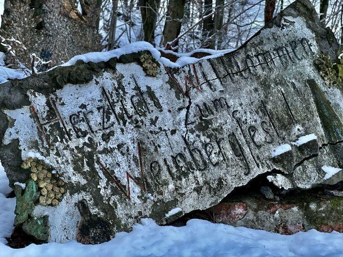 Frozen trees on rocks