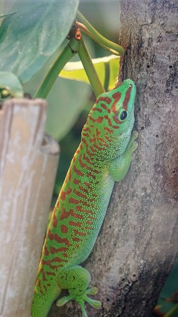 Reptile Behind Glass Green Color Animals In The Wild Nature Animal Wildlife Animal Body Part EyeEmBestPics From My Point Of View Camouflage Capture The Moment Taking Photos Reptile Zoo Frankfurt Visiting Zoo One Animal Beautiful Nature Echsen Terrarium