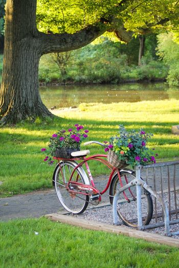 Celebrate Your Ride Landscape Elizabeth Park Park Connecticut Old Bike Flower Basket Bicycle Morning New England  Quiet Peaceful Large Tree Pond House Pond Spring Purple Flower Red Bike Old Bicycle Timeless Live For The Story