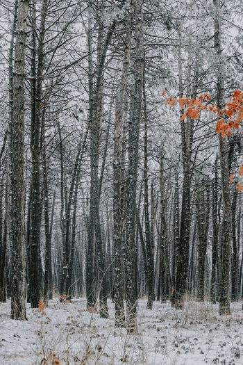Trees in forest during winter