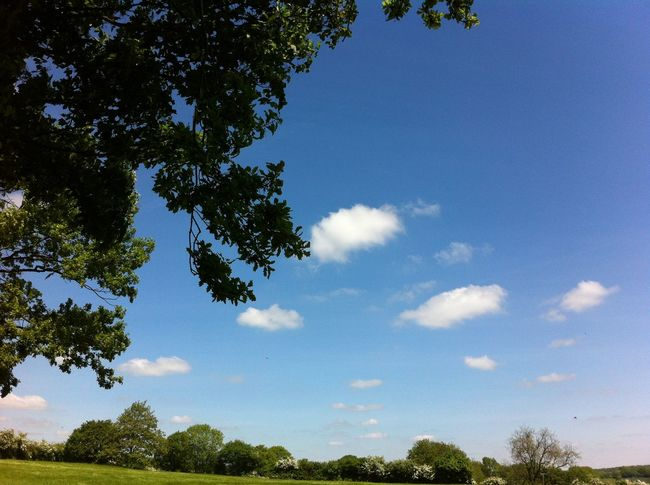 Agriculture Beauty In Nature Blue Branch Cloud - Sky Countryside Day Field Grassy Green Green Color Growth Lush Foliage Nature No People Non-urban Scene Outdoors Plant Remote Scenics Sky Solitude Tranquil Scene Tranquility Tree