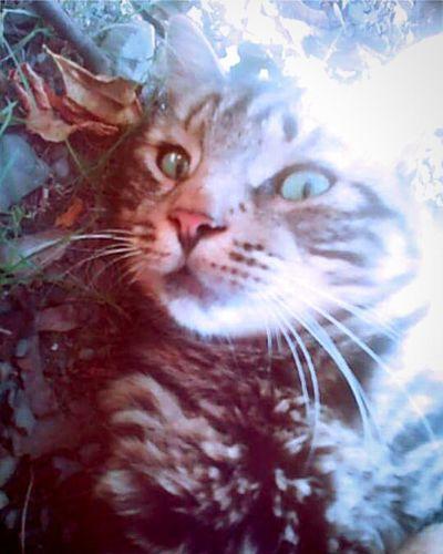 Catlover Catsarelife Catsaremyaddiction