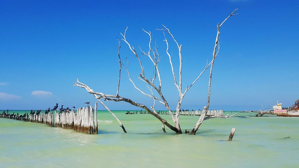 Holbox Holboxisland Sea Blue Quiet Places Paradise Beach
