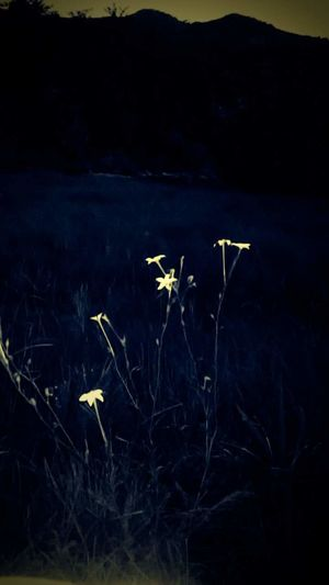 Flowes Sad Alone Alone In The Wood Dark Beauty In Nature Nature Ep