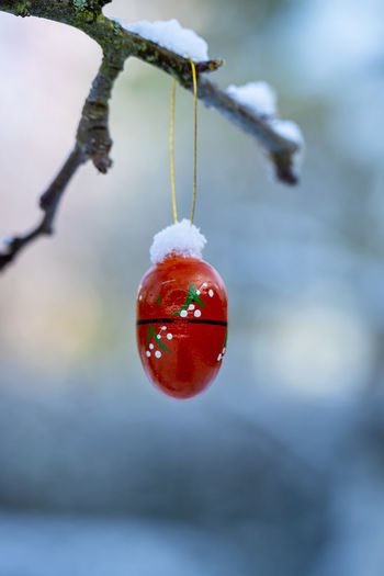 Close-up of strawberry hanging on tree