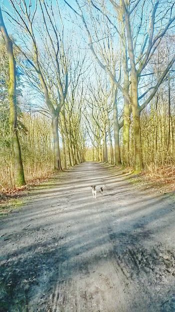 Hi! Mikey<3 Love <3 Pictureoftheday Beautiful Day Beautiful Nature Walk This Way Thats My Dog ILoveMyCity