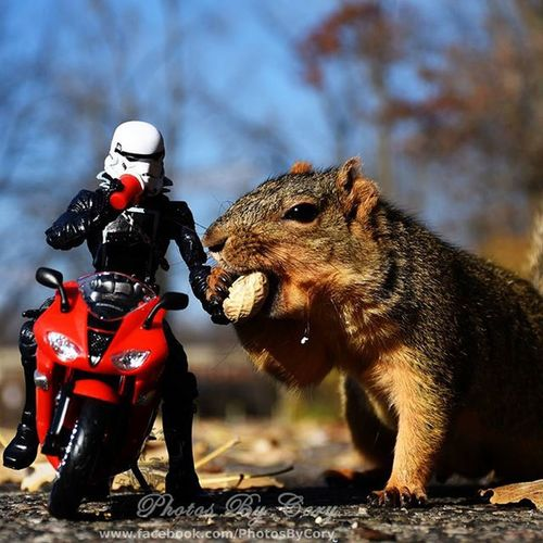 Nothing like a warm drink and a snack with a friend after a chilly ride. Funwiththesquirrels Luckywiththeanimals Motorcycle Trooperrider Squirrelsofinstagram Squirrel Captures_autumn Animallovers Animalsofinstagram Bestoftheday Beautyofnature Bestcaptureglobal Exklusive_shot