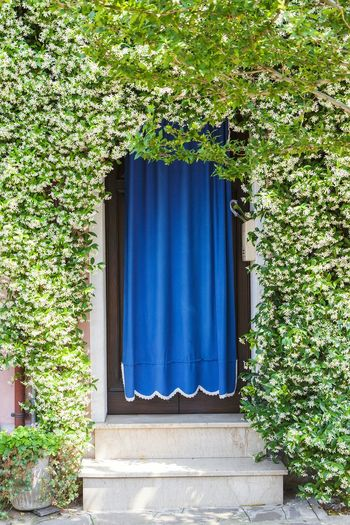 Doors Entrance Home Plants Blossoming  Blossom Doorway Venice Italy Burano Travel House Cover Door Cover