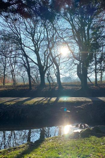 Sunlight streaming through trees on lake