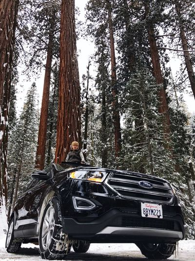 Sequoia State Park, California, road trip Transportation Mode Of Transportation Tree Land Vehicle Day No People Summer Road Tripping Car Outdoors Travel Forest Road Nature The Traveler - 2018 EyeEm Awards