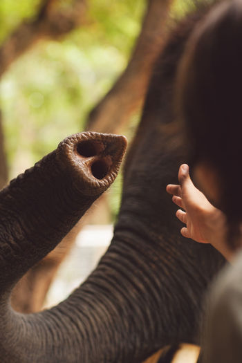 Elephant One Animal Mammal Mouth Open Mouth Real People Focus On Foreground Vertebrate One Person Animal Wildlife Animal Body Part Lifestyles Headshot Selective Focus Looking Childhood Hand Pets Animal Trunk